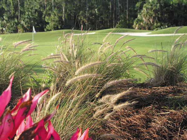 A view of green at Naples Heritage Golf Club