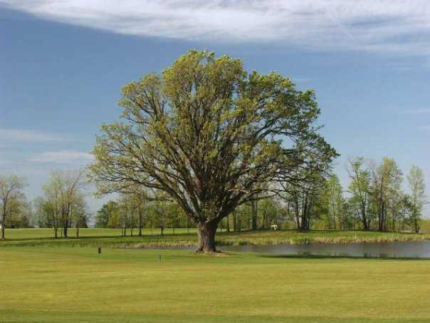 A view from Island Oaks at Lima Golf & Country Club