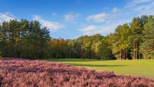 The tree-lined and bunker protected 2nd green at Tilgate Forest Golf Centre.