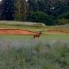 Deer at Hurtmore Golf Club.