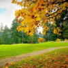 A view of hole #7 at Cowichan Golf and Country Club.