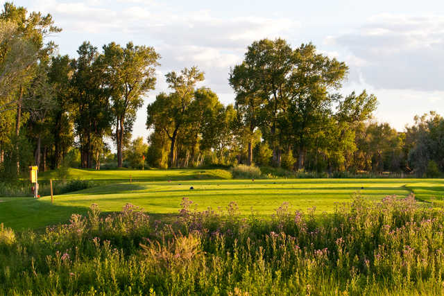 A view of tee #13 and the green in the distance at Cattails Golf Club.