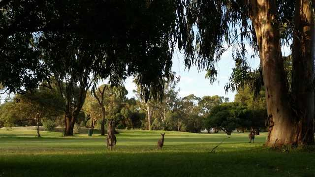View from Deniliquin Golf Club