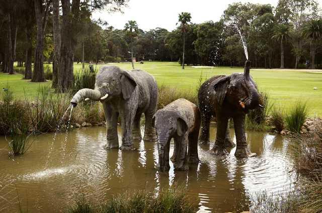 Bayview Golf Club: elephants