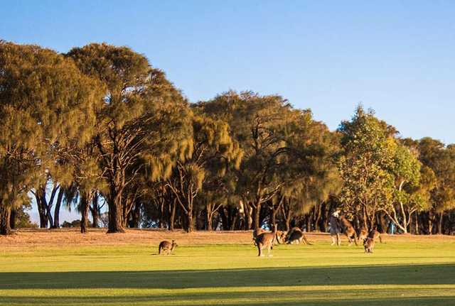 View from Wirrina Golf Course