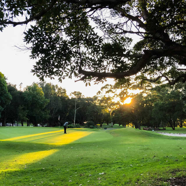 Golfer on a green at Cammeray Golf Club