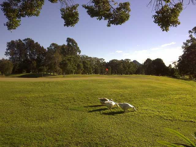 A sunny view of green at Mullumbimby Golf Club