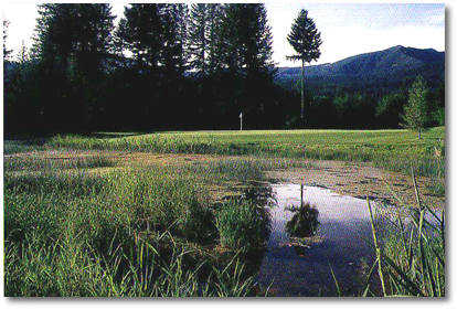 Elkhorn Golf Course: #11