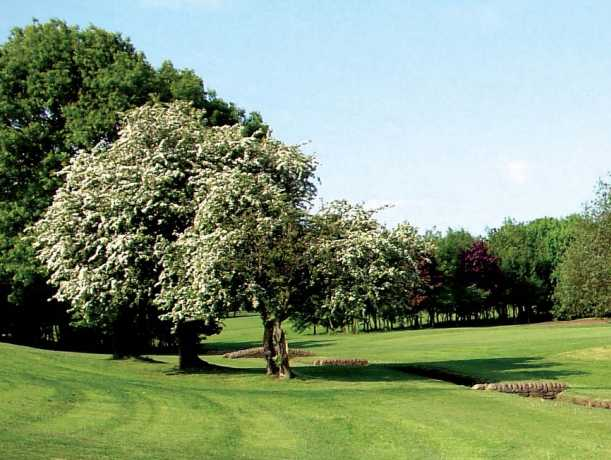 A spring view from Bradley Park Golf Club