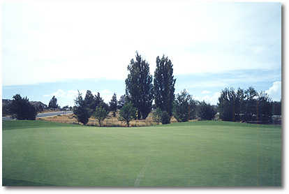 Greens at Redmond #1 (John Vawter)