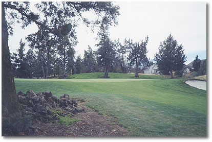 Greens at Redmond #2 (John Vawter)