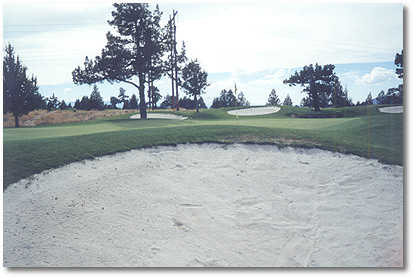 Greens at Redmond #7 (John Vawter)