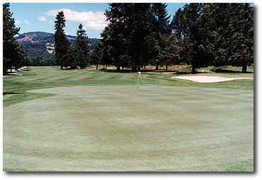 Lewis River #12: The distance is the only hazard on hole #12. It's a whopping 649-yard par 5 from the blue tees. The only thing you have to think about is distance if you are to hit this extra large green in regulation.