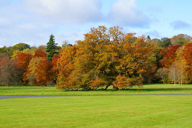 A fall view from SCHLOSS Roxburghe Golf Course