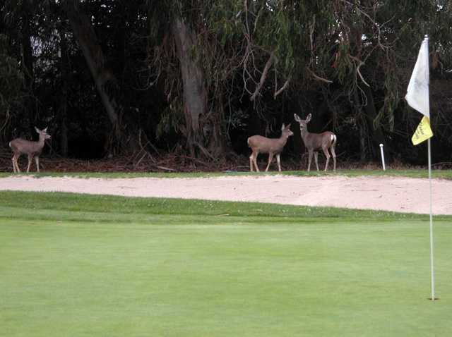 A view of a hole at Marshallia Ranch Golf Course