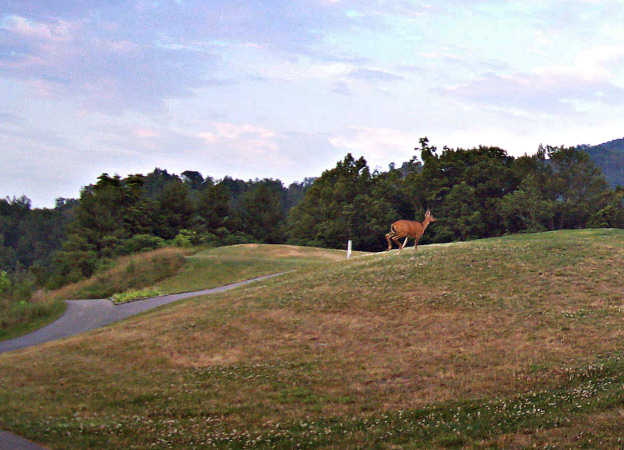 A view from Sleepy Hollow Golf Course (Brandon Goins)