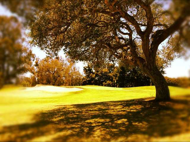 A view of a green at Blacklake Golf Resort