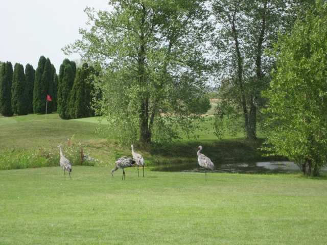 A view of some birds resting near a green at Marengo Ridge Golf & Country Club