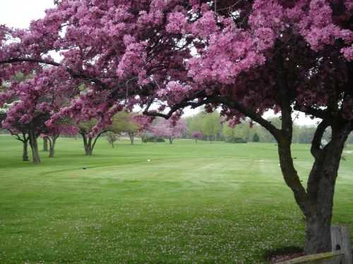 A view of a tee at Shiloh Park Golf Course