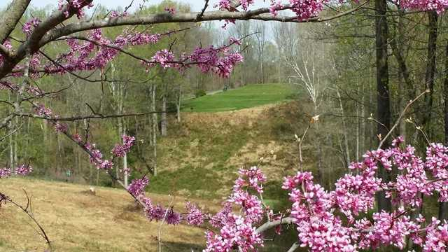 A view of the 15th tee through a Redbud tree at Little Bennett Golf Course