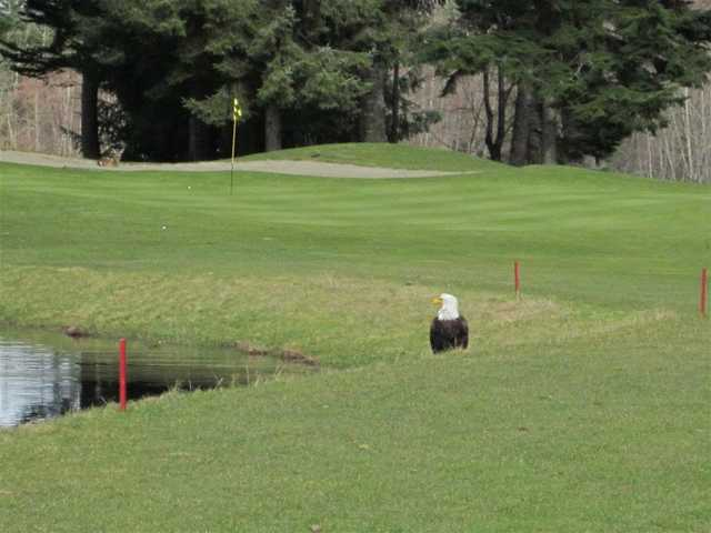 A view of the 9th green at Storey Creek Golf Club