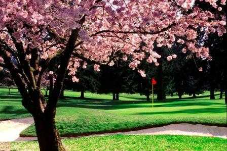 A spring view of a green at Tualatin Country Club