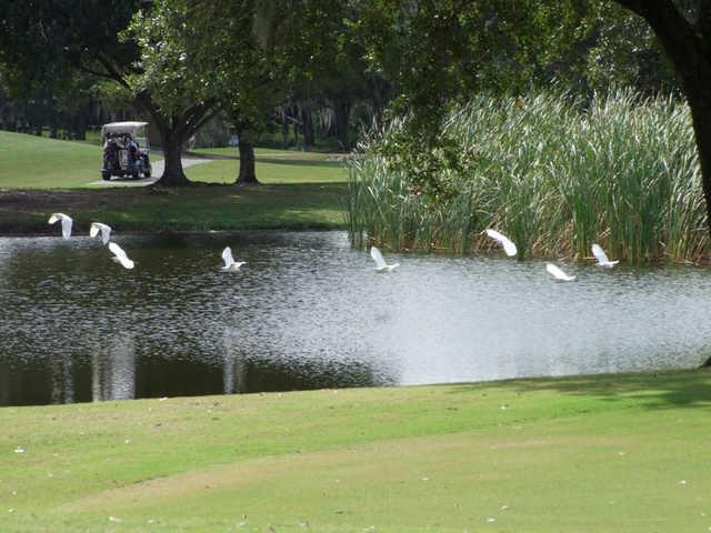 A view from Tatum Ridge Golf Links