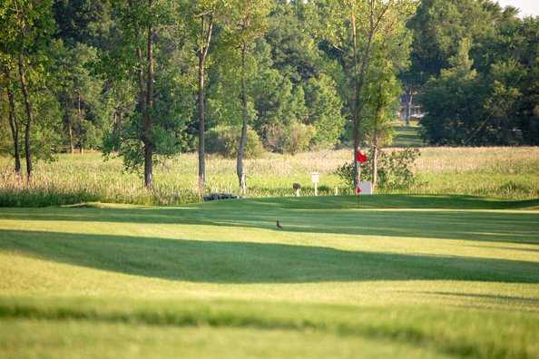 A sunny view from Fox Lake Golf Club