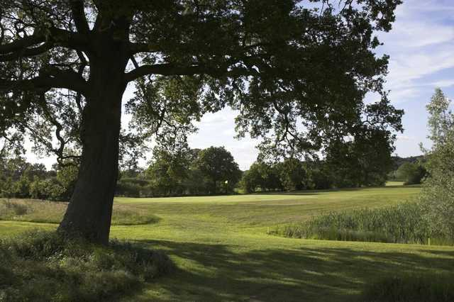 From the 7th green, one of the many mature oaks found at Hartley Wintney Golf Club can be seen.