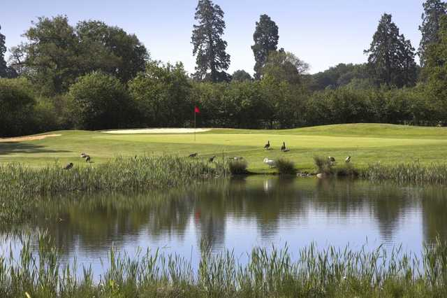 The 14th green at Hartley Wintney Golf Club has its own unique hazards to contend with!