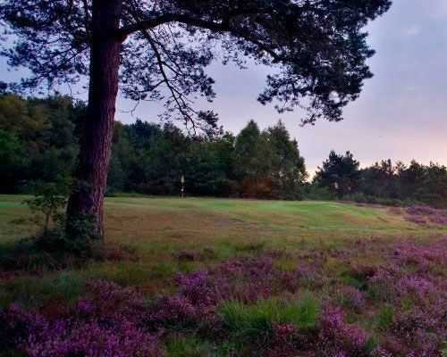 Heather at Crowborough Beacon Golf Club