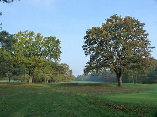 Trees on the course at Thetford Golf Club