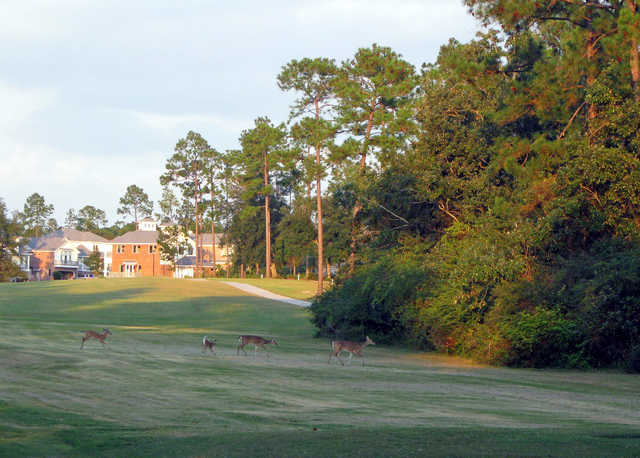 A view of the 6th hole at Diamondhead Country Club - Cardinal Course with clubhouse and deers in background