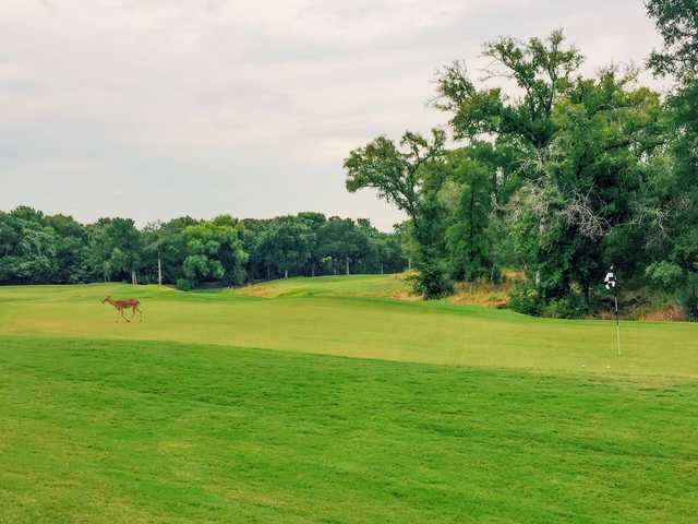 A view of green #11 and a deer visitor at Wolfdancer Golf Club