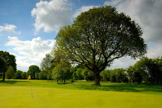 The famous Langer tree at Fulford Golf Club