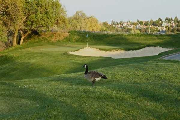 A view of a green from Lone Tree Golf Course