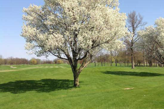 A spring view of a green at Deer Track Golf Course