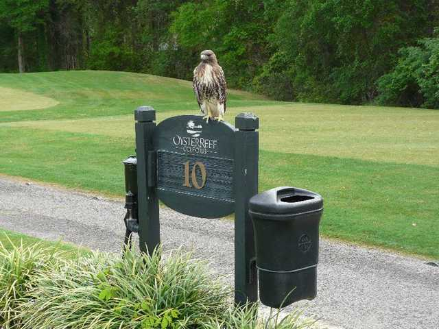 A view of tee #10 sign and a bird visitor at Oyster Reef Golf Course