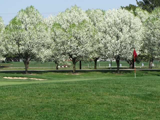 A splendid spring day view of a hole surrounded by blossomed trees at Sahm Golf Course