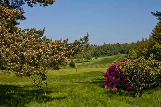 A sunny day view of a green at Royal Belfast Golf Club
