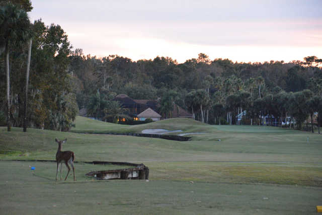 A special guest looking to a hole at Alaqua Country Club