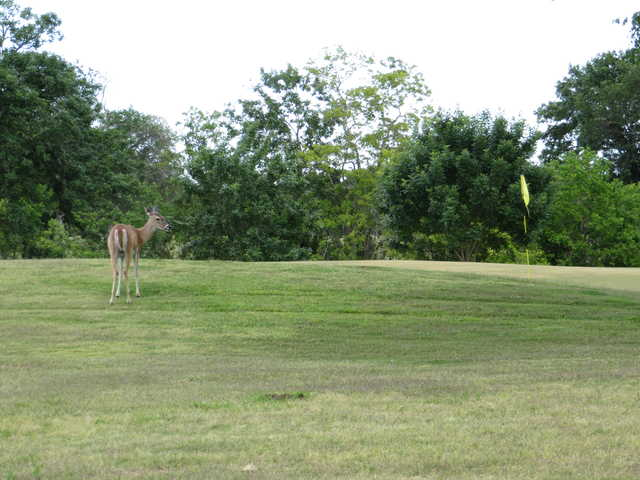 A special guest looking at a green from Rio Colorado Golf Course
