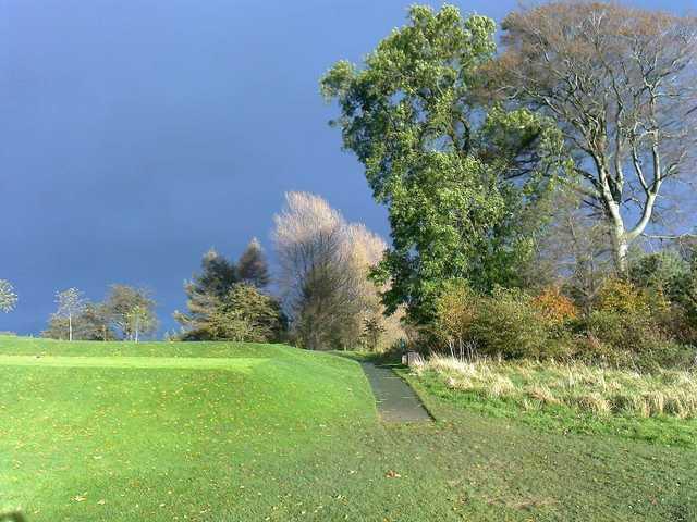 Treeline along the course