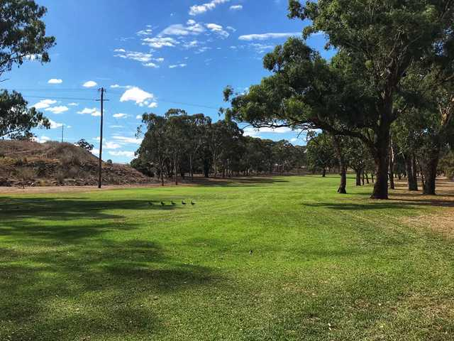 A view of a fairway at Muswellbrook Golf Club.