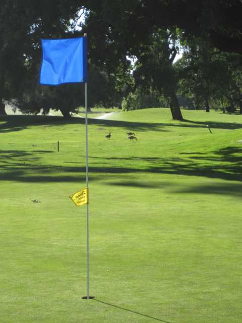 A view of green at Swenson Park Golf Course