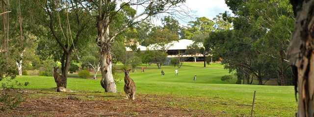 A view from Pambula Merimbula Golf Club