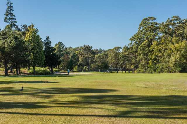 A view from a fairway at Gosford Golf Club.