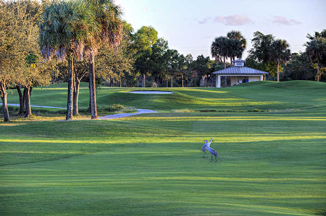 A view from a fairway at Okeeheelee Golf Course.