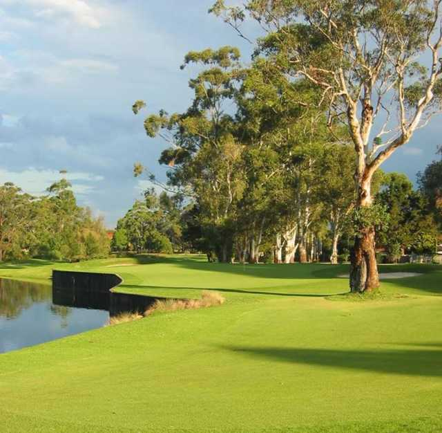 View of the 17th green at Ryde-Parramatta Golf Club