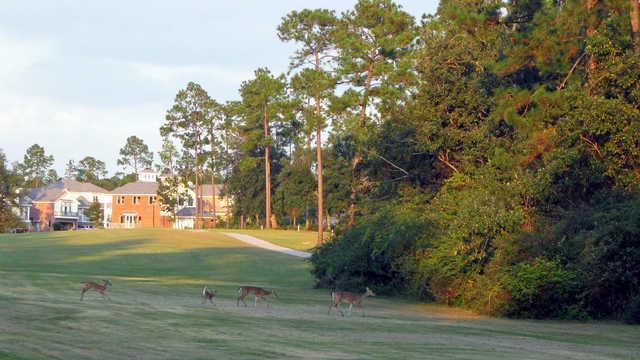 Diamondhead Country Club - Cardinal Course